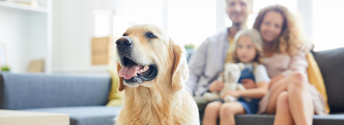 El perro ideal para cada familia