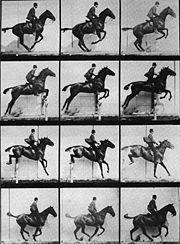 caballo en movimiento