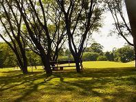 Parque y arboles