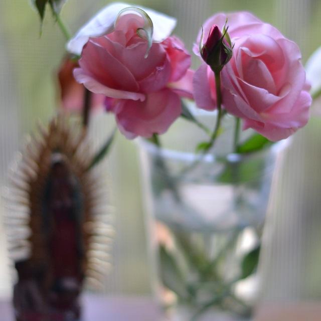 una rosa misionera